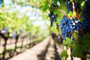 WWelcher Wein wird in Prag angebaut? Probieren die Weinberg-Gemütlichkeit des Grébovka