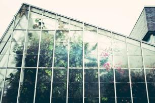 Ein Dschungel, der nicht schläft: romantische Nachtspaziergänge durch das Tropenhaus Fata Morgana