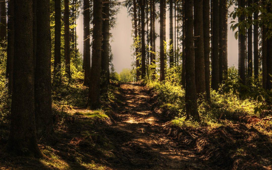 Lehrpfad durch die Naturschutzgebiete Barrandovské skály (Barrandov-Felsen) – Chuchelský háj (Chuchle-Hain): ein angenehmer Weg, welcher auch für Kinderwagen geeignet ist